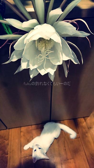 image_0694.jpg